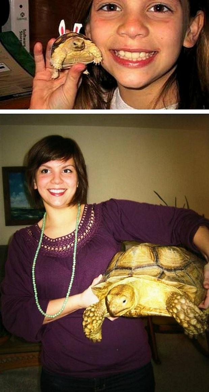 O tempo passou e a tartaruga cresceu e muito (Foto: Reprodução)