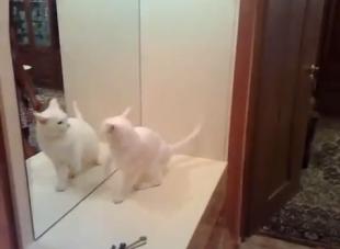 Gatinho brigando com reflexo é sucesso