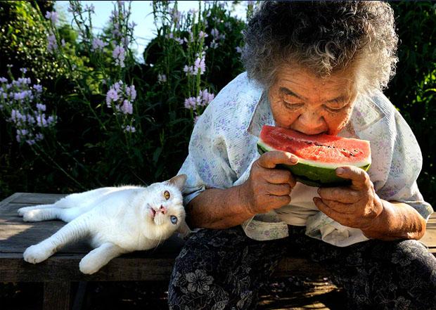 Idosa tem a companhia do gato em todos os momentos (Foto: Reprodução/  Misa e Fukumaru (Foto: Reprodução/  Miyoko Ihara)