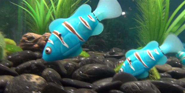 Peixe robô é mantido por duas pequenas baterias (Foto: Reprodução)