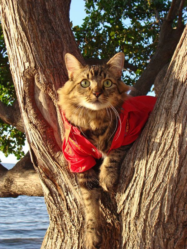 Lorenzo se mostra à vontade em árvore mesmo vestido com uma camisa vermelha estampada (Foto: Joann Biondi)