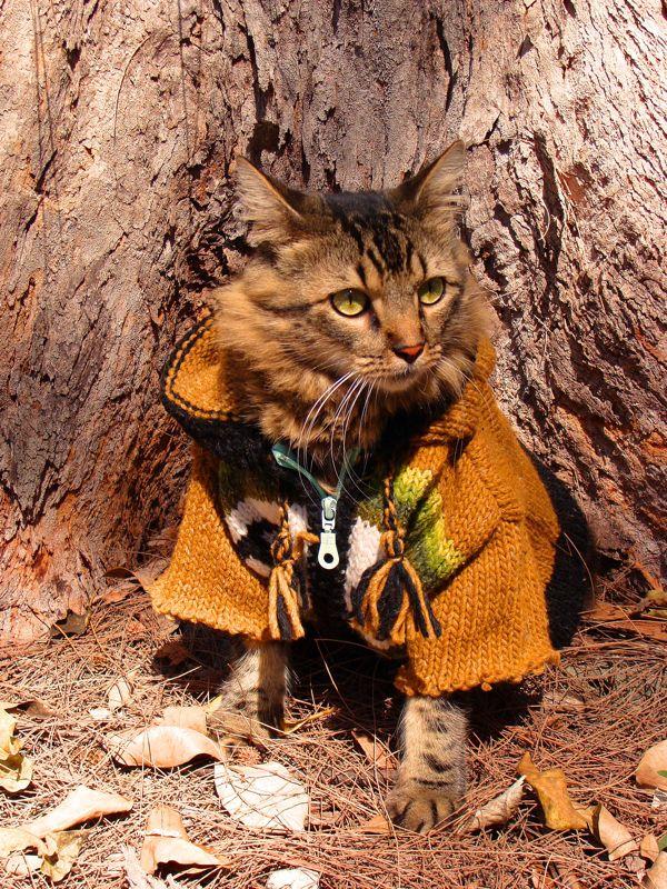 Gato Lorenzo de casaco embaixo de árvore (Foto: Joann Biondi)