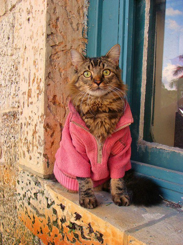 Gatinho faz pose de modelo ao lado de janela (Foto: Joann Biondi)