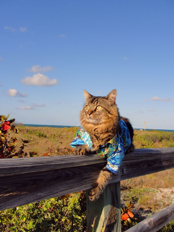 Lorenzo de blusa florida com campo ao fundo (Foto: Joann Biondi)