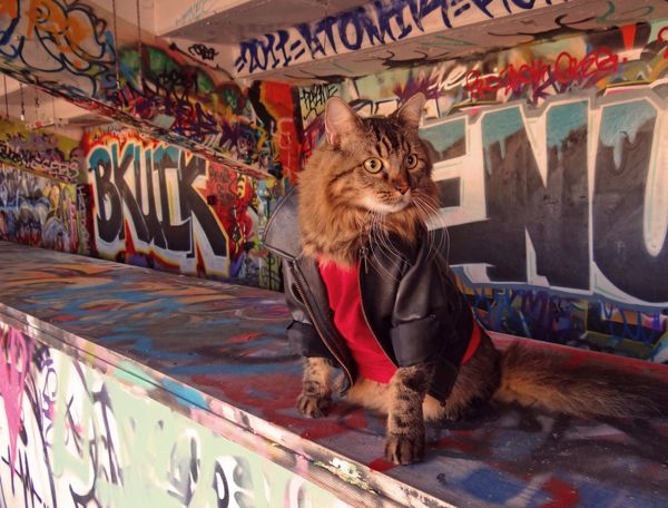 Lorenzo, o gato, posa de jaqueta preta e camisa vermelha (Foto: Joann Biondi)
