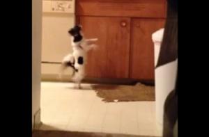 Cachorro dançarino consegue mais de 1 milhão de views no YouTube
