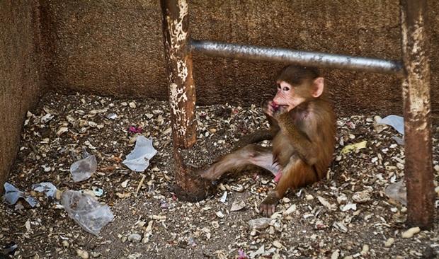 Macaco em um zoológico, em meio ao lixo (Foto: Reprodução/Jon Amad) (Foto: Macaco em um zoológico, em meio ao lixo (Foto: Reprodução/Jon Amad))