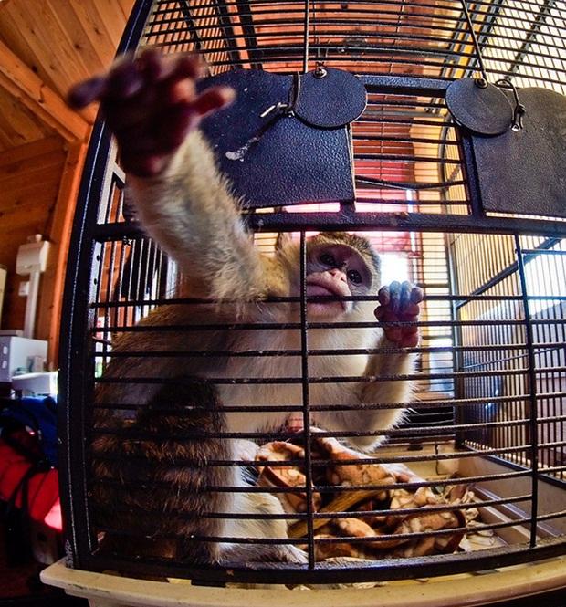 Macaco do zoológico de Sevilha, Espanha (Foto: Reprodução/Jon Amad)