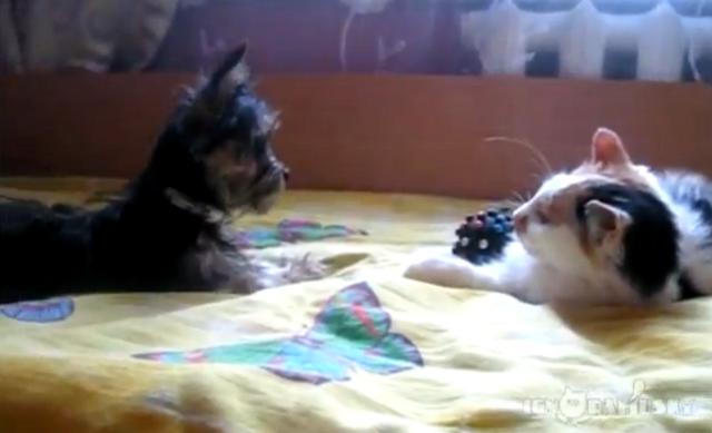 Cachorro tenta roubar brinquedo de gato  (Foto: Reprodução/YouTube)