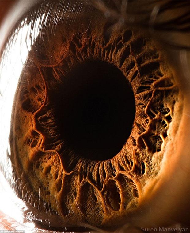 A macro-fotografia da íris produz imagens impressionantes (Foto: Reprodução/ Suren Manvelyan)