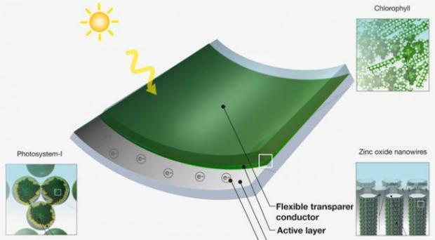 Painéis solares do MIT (Foto: Reprodução)