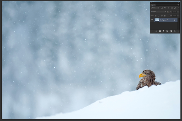 Imagem de águia aberta no Photoshop (Foto: Reprodução/André Sugai)
