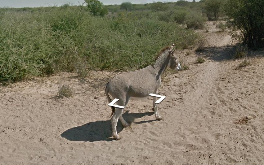 Cavalo aparece em pé em foto (Foto: Reprodução)