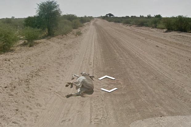 Foto de burro caido no Street View gerou polêmica na web (Foto: Reprodução/Daily Dot)