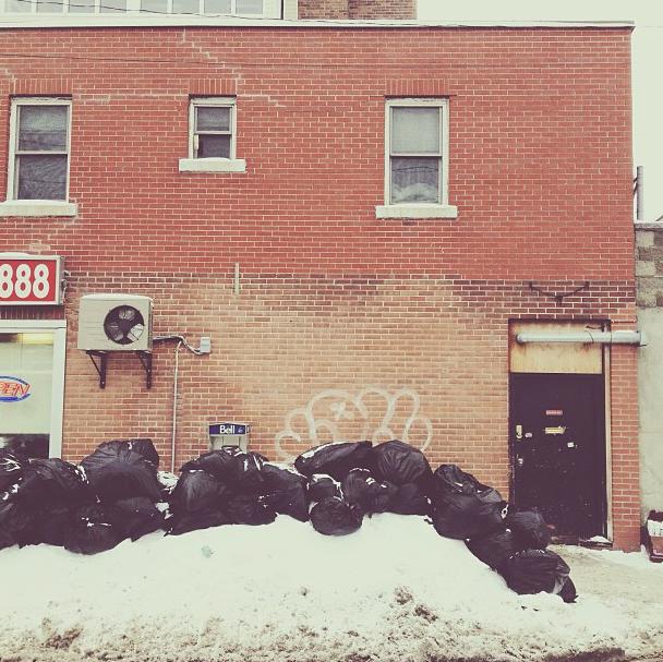 Artista plástico Andrew Knapp fotografou seu cachorro camuflado entre sacos de lixo (Foto: Reprodução/Instagram)