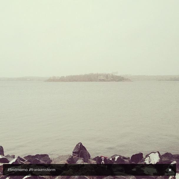 Momo posa perto do mar na costa norte de Ontario, Canadá