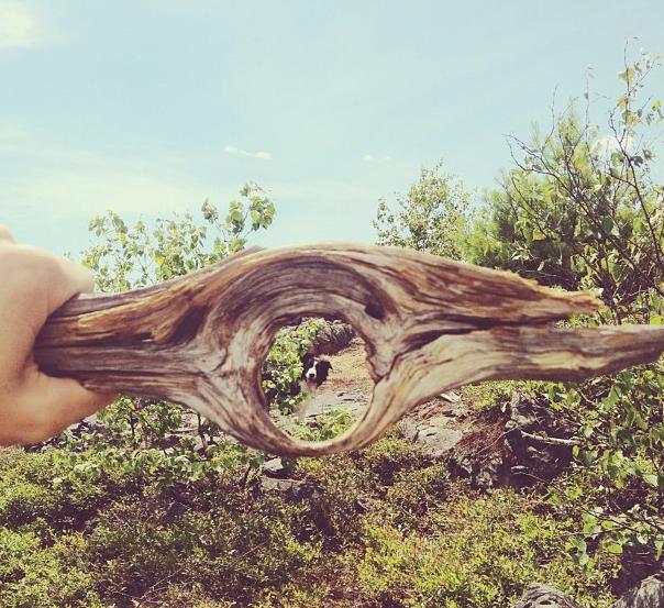 Momo passei com seu dono por floresta no Canadá