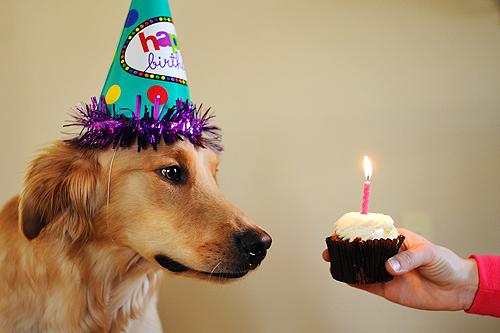 Foto tirada no aniversário de Pickles mostra cadelinha de chapéu (Foto: Patrick Smith)