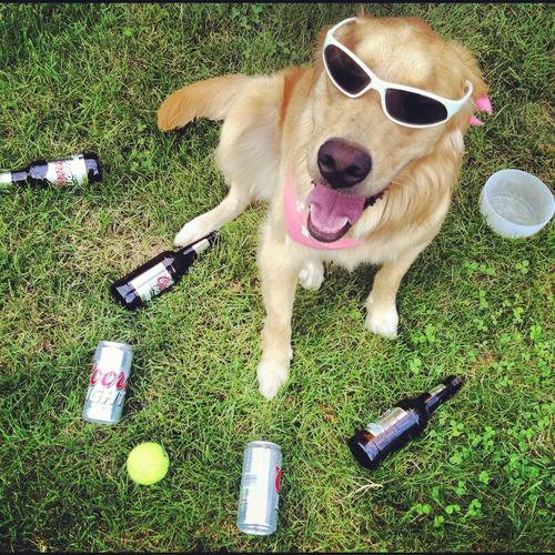 Patrick Smith utiliza latinhas vazias de cerveja para tirar fotos engraçadas de sua cadela (Foto: Patrick Smith)