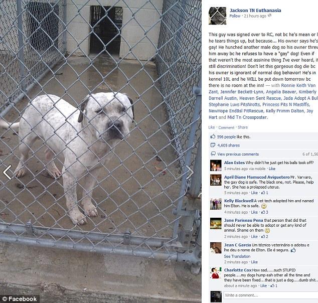 Campanha no Facebook salvou a vida do animal (Foto: Reprodução/Flickr)