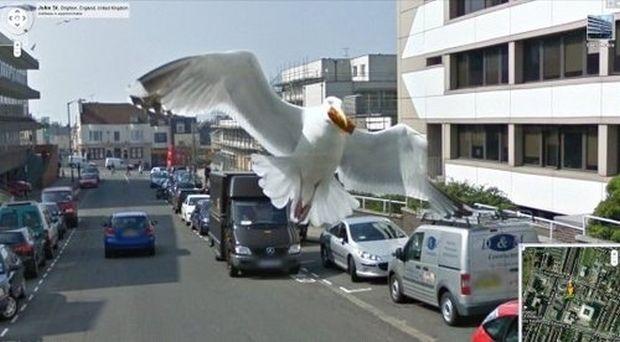 Pássaro flagrado no Google Street View (Reprodução|BuzzFeed)