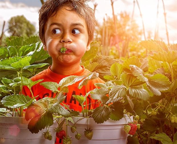 """Aqui o filho de Adrian """"roubou"""" um morango discretamente (Foto: Divulgação/ Adrian Sommeling)"""