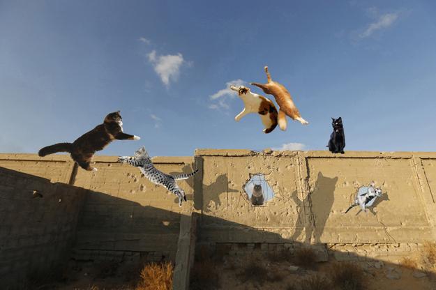 Jovens palestinos deram lugar aos gatos praticantes de parkour na Faixa de Gaza (Foto: Reprodução/Poyi Cats)