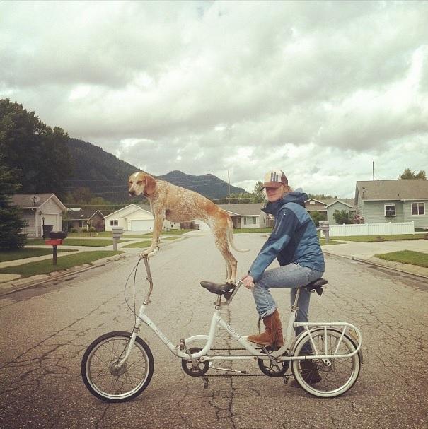 Cadela andando de bicicleta