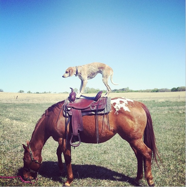 Maddie montando no cavalo (Foto: Reprodução/This Wild Idea)