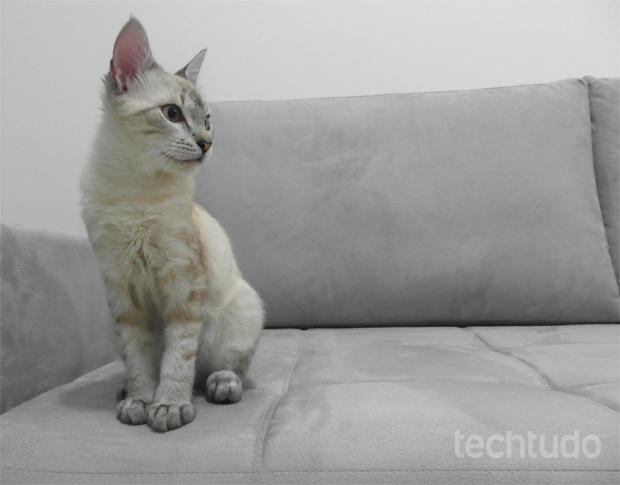Foto de gato tirada com a WB850F: bom desempenho em clique em ambientes internos (Foto: Isadora Díaz/TechTudo)