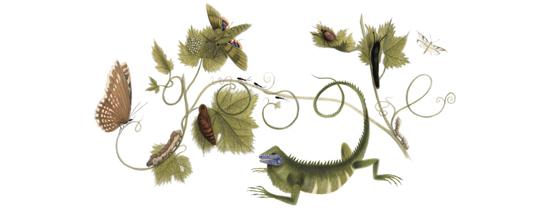 Maria Sibylla Merian gostava de retratar em suas obras temas naturalistas