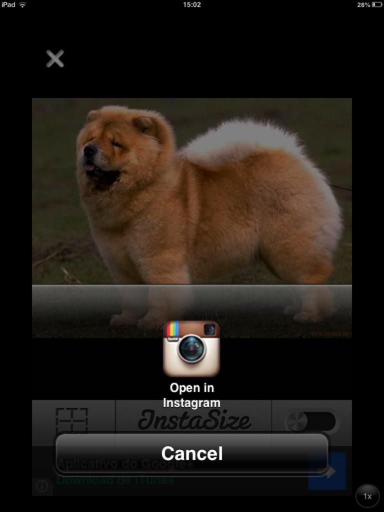 Redirecionando foto para o Instagram (Foto: Reprodução/Carolina Ribeiro)
