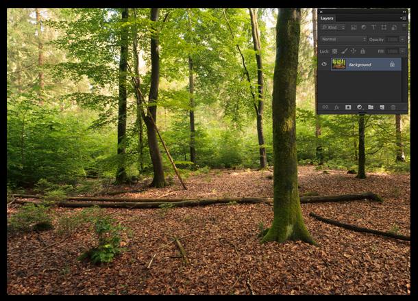 Foto de floresta que receberá os raios de sol artificiais (Foto: Reprodução/André Sugai)