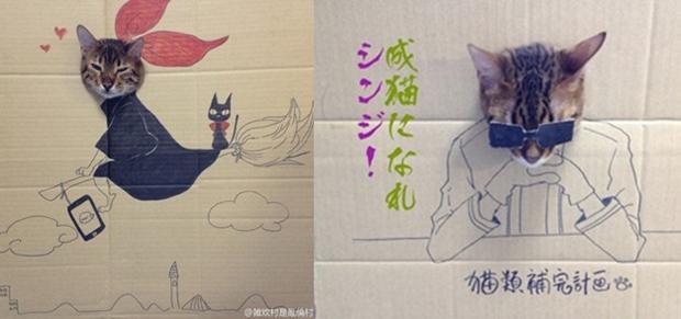 Gato Guagua fazendo cosplay em caixa de papelão (Foto: Reprodução/ Toshiya)