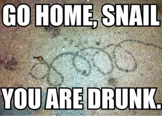"""Na imagem, """"Vá para casa, caracol. Você está bêbado"""" (Foto: Reprodução/Bored Panda)"""
