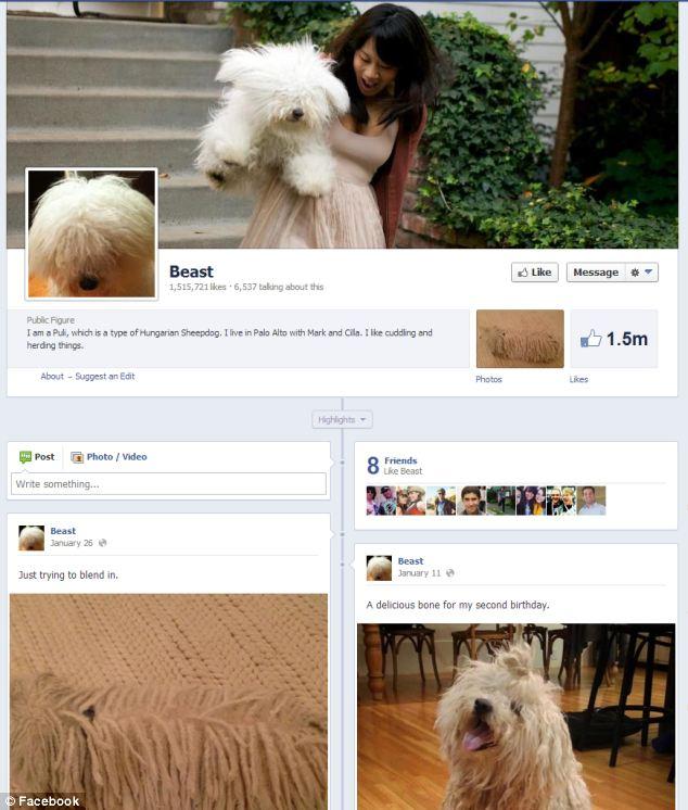 Número crescente de páginas do Facebook não são de humanos. Nem o cachorro de Mark Zuckerberg escapou da tendência (Foto: Divulgação)