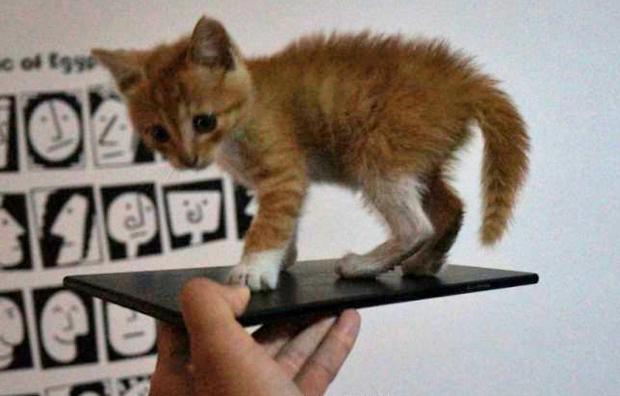 Xperia ZU vaza em suposta imagem: foblet é maior que um gato! (Foto: Reprodução/Esato)