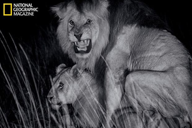 Luzes infravermelhas garantiram capturas noturnas sem perturbar os animais (Foto: Divulgação)