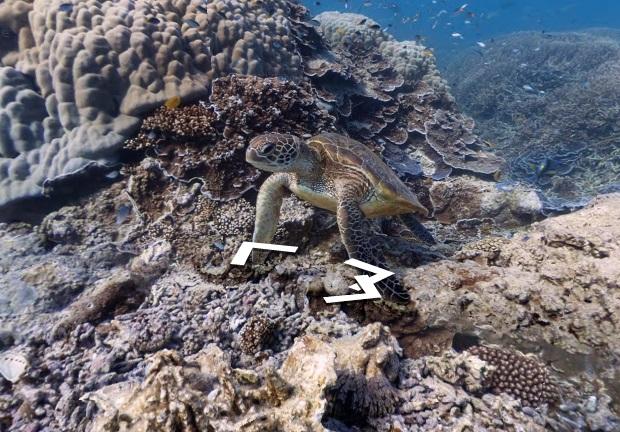 Imagens subaquáticas de Galápagos são impressionantes (Foto: Divulgação)