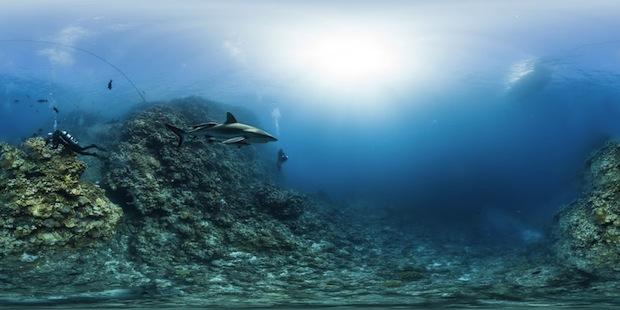 Fotos dos corais no projeto Global Reef Record (Foto: Reprodução/Global Reef Record)