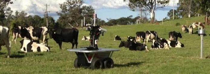 Vaqueiro eletrônico Rover tem capacidade de controlar grupos de até 150 vacas (foto: Reprodução/CNet)