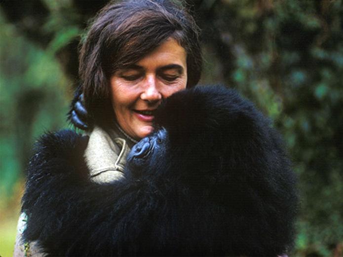 Fosey estudou com os gorilas na África (Foto: Reprodução/Biografie Online)