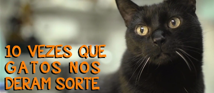 Na Sexta Feira 13 Confira 10 Vezes Em Que Gatos Nos Deram