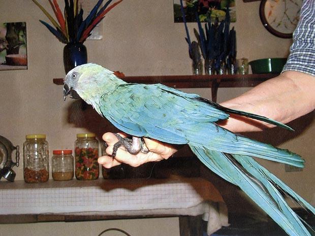 Brasileira descobre que ele tem pau grande e engole tudo wwwamadoras69com - 2 1