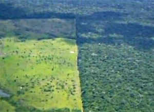 Desmatamento no Mato Grosso (Foto: Reprodução/TV Globo)