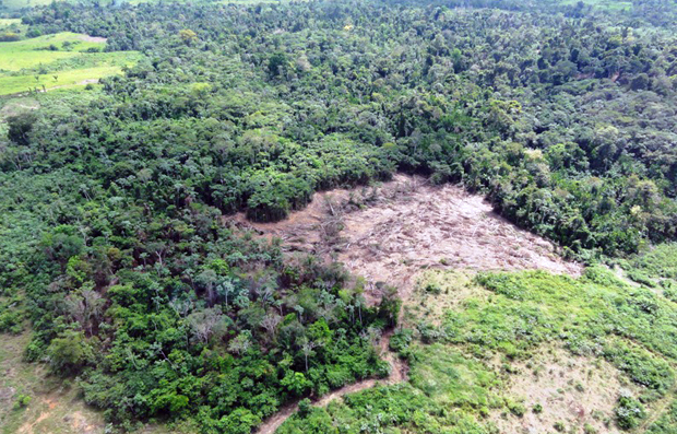 Área desmatada em Nova Ipixuna (Foto: Nelson Feitosa/Ibama)