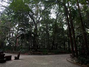 Parque Trianon (Foto: Daigo Oliva/G1)