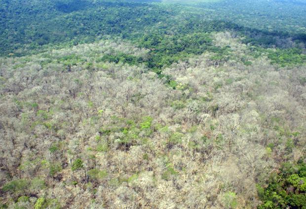 Área da floresta amazônica atingida por reagentes químicos em Canutama (AM) (Foto: Divulgação/Ibama)