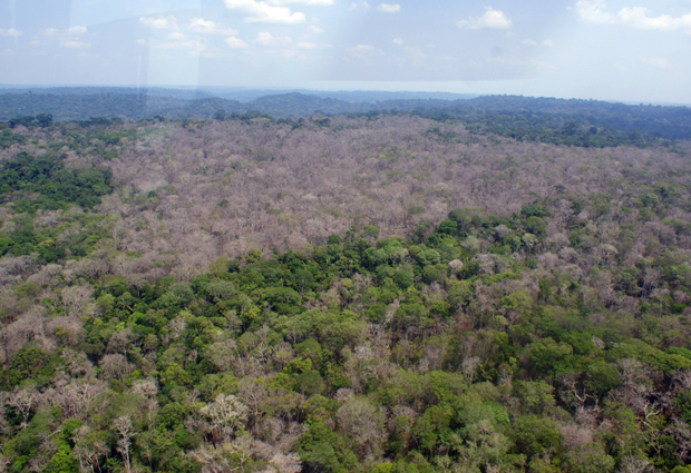 Ministério do Meio Ambiente vai reforçar fiscalização na área de fronteira agrícola entre os estados do Amazonas e Rondônia (Foto: Divulgação/Ibama)