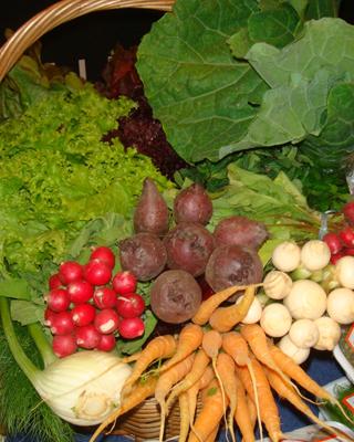 Verduras orgânicas (Foto: Cristina Baran/Divulgação)